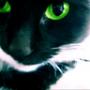 KIEV CAT